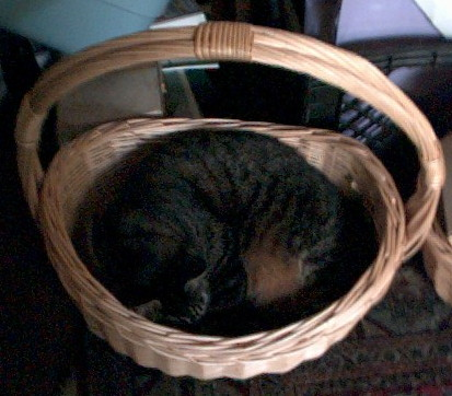 Mighty Hunter Egil, napping in a basket